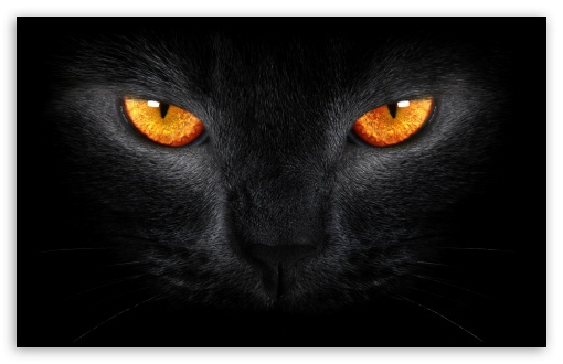 Black Cat UltraHD Wallpaper for Wide 16:10 5:3 Widescreen WHXGA WQXGA WUXGA WXGA WGA ; 8K UHD TV 16:9 Ultra High Definition 2160p 1440p 1080p 900p 720p ; Standard 4:3 5:4 3:2 Fullscreen UXGA XGA SVGA QSXGA SXGA DVGA HVGA HQVGA ( Apple PowerBook G4 iPhone 4 3G 3GS iPod Touch ) ; iPad 1/2/Mini ; Mobile 4:3 5:3 3:2 16:9 5:4 - UXGA XGA SVGA WGA DVGA HVGA HQVGA ( Apple PowerBook G4 iPhone 4 3G 3GS iPod Touch ) 2160p 1440p 1080p 900p 720p QSXGA SXGA ;