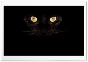 Black Cat Eyes HD Wide Wallpaper for Widescreen
