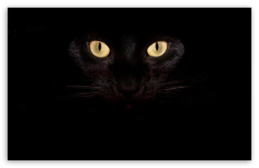 Black Cat Eyes Ultra Hd Desktop Background Wallpaper For 4k Uhd Tv Tablet Smartphone