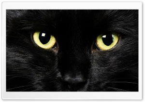 Black Cat Face HD Wide Wallpaper for Widescreen