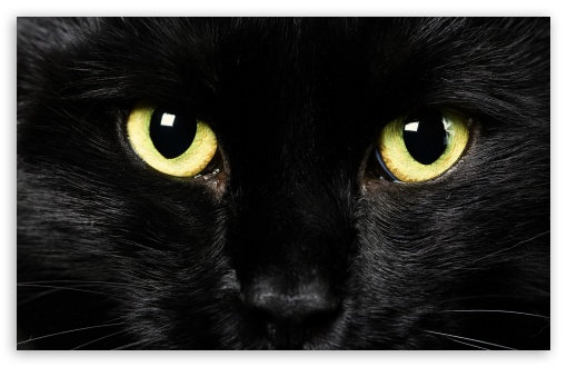 Black Cat Face ❤ 4K UHD Wallpaper for Wide 16:10 5:3 Widescreen WHXGA WQXGA WUXGA WXGA WGA ; 4K UHD 16:9 Ultra High Definition 2160p 1440p 1080p 900p 720p ; Standard 4:3 5:4 3:2 Fullscreen UXGA XGA SVGA QSXGA SXGA DVGA HVGA HQVGA ( Apple PowerBook G4 iPhone 4 3G 3GS iPod Touch ) ; iPad 1/2/Mini ; Mobile 4:3 5:3 3:2 16:9 5:4 - UXGA XGA SVGA WGA DVGA HVGA HQVGA ( Apple PowerBook G4 iPhone 4 3G 3GS iPod Touch ) 2160p 1440p 1080p 900p 720p QSXGA SXGA ;