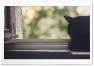 Black Cat Near Window HD Wide Wallpaper for Widescreen