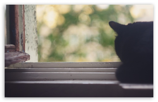 Black Cat Near Window HD wallpaper for Wide 16:10 5:3 Widescreen WHXGA WQXGA WUXGA WXGA WGA ; HD 16:9 High Definition WQHD QWXGA 1080p 900p 720p QHD nHD ; Standard 4:3 5:4 3:2 Fullscreen UXGA XGA SVGA QSXGA SXGA DVGA HVGA HQVGA devices ( Apple PowerBook G4 iPhone 4 3G 3GS iPod Touch ) ; Tablet 1:1 ; iPad 1/2/Mini ; Mobile 4:3 5:3 3:2 16:9 5:4 - UXGA XGA SVGA WGA DVGA HVGA HQVGA devices ( Apple PowerBook G4 iPhone 4 3G 3GS iPod Touch ) WQHD QWXGA 1080p 900p 720p QHD nHD QSXGA SXGA ;
