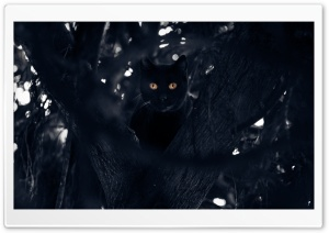Black Cat Perched in a Tree HD Wide Wallpaper for Widescreen