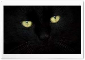 Black Cat Portrait HD Wide Wallpaper for Widescreen