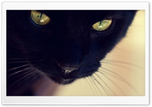 Black Cat Yellow Eyes HD Wide Wallpaper for Widescreen