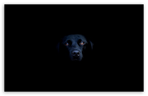 Black Dog ❤ 4K UHD Wallpaper for Wide 16:10 5:3 Widescreen WHXGA WQXGA WUXGA WXGA WGA ; 4K UHD 16:9 Ultra High Definition 2160p 1440p 1080p 900p 720p ; Standard 4:3 5:4 3:2 Fullscreen UXGA XGA SVGA QSXGA SXGA DVGA HVGA HQVGA ( Apple PowerBook G4 iPhone 4 3G 3GS iPod Touch ) ; Tablet 1:1 ; iPad 1/2/Mini ; Mobile 4:3 5:3 3:2 16:9 5:4 - UXGA XGA SVGA WGA DVGA HVGA HQVGA ( Apple PowerBook G4 iPhone 4 3G 3GS iPod Touch ) 2160p 1440p 1080p 900p 720p QSXGA SXGA ; Dual 4:3 5:4 UXGA XGA SVGA QSXGA SXGA ;