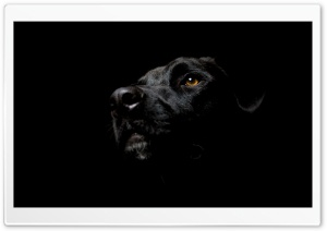 Black Dog HD Wide Wallpaper for Widescreen