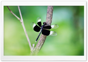 Black Dragonfly HD Wide Wallpaper for Widescreen