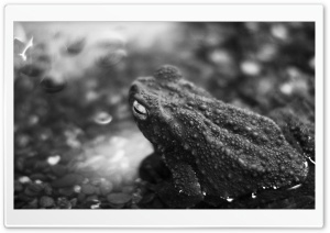 Black Frog HD Wide Wallpaper for Widescreen