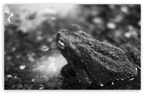 Black Frog ❤ 4K UHD Wallpaper for Wide 16:10 5:3 Widescreen WHXGA WQXGA WUXGA WXGA WGA ; 4K UHD 16:9 Ultra High Definition 2160p 1440p 1080p 900p 720p ; UHD 16:9 2160p 1440p 1080p 900p 720p ; Standard 4:3 5:4 3:2 Fullscreen UXGA XGA SVGA QSXGA SXGA DVGA HVGA HQVGA ( Apple PowerBook G4 iPhone 4 3G 3GS iPod Touch ) ; Tablet 1:1 ; iPad 1/2/Mini ; Mobile 4:3 5:3 3:2 16:9 5:4 - UXGA XGA SVGA WGA DVGA HVGA HQVGA ( Apple PowerBook G4 iPhone 4 3G 3GS iPod Touch ) 2160p 1440p 1080p 900p 720p QSXGA SXGA ;