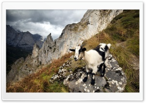 Black Goat HD Wide Wallpaper for Widescreen