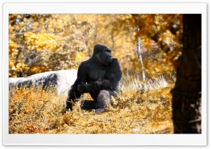 Black Gorilla Autumn HD Wide Wallpaper for Widescreen