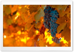 Black Grapes HD Wide Wallpaper for Widescreen