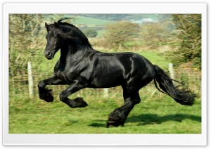Black Horse Ultra HD Wallpaper for 4K UHD Widescreen desktop, tablet & smartphone