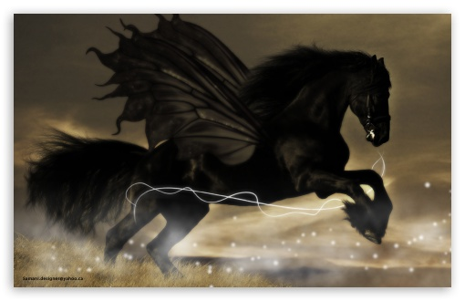 Black Horse HD wallpaper for Wide 16:10 5:3 Widescreen WHXGA WQXGA WUXGA WXGA WGA ; HD 16:9 High Definition WQHD QWXGA 1080p 900p 720p QHD nHD ; Standard 3:2 Fullscreen DVGA HVGA HQVGA devices ( Apple PowerBook G4 iPhone 4 3G 3GS iPod Touch ) ; Mobile 5:3 3:2 16:9 - WGA DVGA HVGA HQVGA devices ( Apple PowerBook G4 iPhone 4 3G 3GS iPod Touch ) WQHD QWXGA 1080p 900p 720p QHD nHD ;