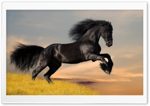 Black Horse HD Wide Wallpaper for Widescreen