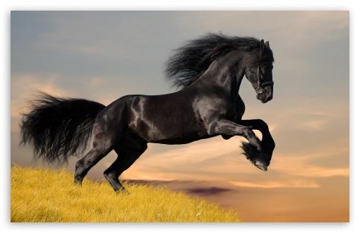 Download Black Horse HD Wallpaper