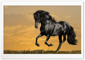 Black Horse Running HD Wide Wallpaper for Widescreen