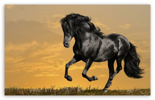 Black Horse Running HD wallpaper for Wide 16:10 5:3 Widescreen WHXGA WQXGA WUXGA WXGA WGA ; HD 16:9 High Definition WQHD QWXGA 1080p 900p 720p QHD nHD ; Standard 4:3 5:4 3:2 Fullscreen UXGA XGA SVGA QSXGA SXGA DVGA HVGA HQVGA devices ( Apple PowerBook G4 iPhone 4 3G 3GS iPod Touch ) ; Tablet 1:1 ; iPad 1/2/Mini ; Mobile 4:3 5:3 3:2 16:9 5:4 - UXGA XGA SVGA WGA DVGA HVGA HQVGA devices ( Apple PowerBook G4 iPhone 4 3G 3GS iPod Touch ) WQHD QWXGA 1080p 900p 720p QHD nHD QSXGA SXGA ;