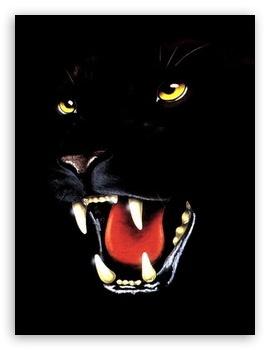 Black Panther Vga Mobile 4k Hd Desktop Wallpaper For