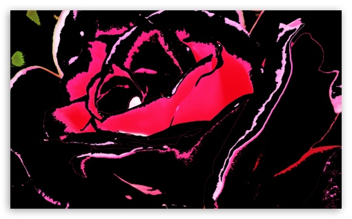 Black Rose HD wallpaper for Wide 5:3 Widescreen WGA ; HD 16:9 High Definition WQHD QWXGA 1080p 900p 720p QHD nHD ; Mobile 5:3 16:9 - WGA WQHD QWXGA 1080p 900p 720p QHD nHD ;
