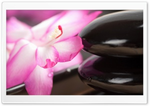 Black Stones And Flower HD Wide Wallpaper for Widescreen