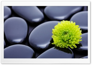 Black Zen Stones And A Yellow Mum HD Wide Wallpaper for 4K UHD Widescreen desktop & smartphone