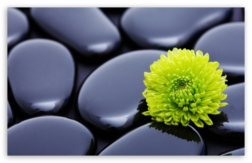 Black Zen Stones And A Yellow Mum HD wallpaper for Wide 16:10 5:3 Widescreen WHXGA WQXGA WUXGA WXGA WGA ; HD 16:9 High Definition WQHD QWXGA 1080p 900p 720p QHD nHD ; Standard 4:3 5:4 3:2 Fullscreen UXGA XGA SVGA QSXGA SXGA DVGA HVGA HQVGA devices ( Apple PowerBook G4 iPhone 4 3G 3GS iPod Touch ) ; Tablet 1:1 ; iPad 1/2/Mini ; Mobile 4:3 5:3 3:2 16:9 5:4 - UXGA XGA SVGA WGA DVGA HVGA HQVGA devices ( Apple PowerBook G4 iPhone 4 3G 3GS iPod Touch ) WQHD QWXGA 1080p 900p 720p QHD nHD QSXGA SXGA ; Dual 16:10 5:3 4:3 5:4 WHXGA WQXGA WUXGA WXGA WGA UXGA XGA SVGA QSXGA SXGA ;