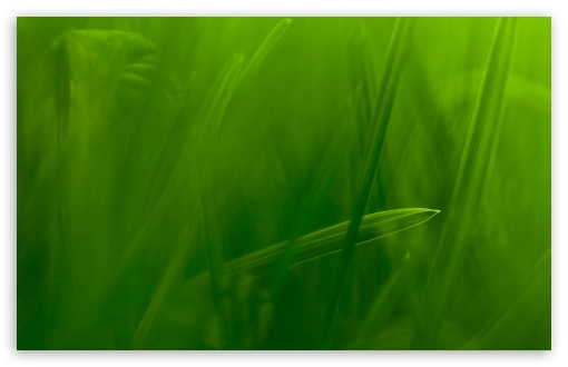 Blade Of Grass HD wallpaper for Wide 16:10 5:3 Widescreen WHXGA WQXGA WUXGA WXGA WGA ; HD 16:9 High Definition WQHD QWXGA 1080p 900p 720p QHD nHD ; UHD 16:9 WQHD QWXGA 1080p 900p 720p QHD nHD ; Standard 4:3 5:4 3:2 Fullscreen UXGA XGA SVGA QSXGA SXGA DVGA HVGA HQVGA devices ( Apple PowerBook G4 iPhone 4 3G 3GS iPod Touch ) ; Tablet 1:1 ; iPad 1/2/Mini ; Mobile 4:3 5:3 3:2 16:9 5:4 - UXGA XGA SVGA WGA DVGA HVGA HQVGA devices ( Apple PowerBook G4 iPhone 4 3G 3GS iPod Touch ) WQHD QWXGA 1080p 900p 720p QHD nHD QSXGA SXGA ; Dual 16:10 5:3 16:9 4:3 5:4 WHXGA WQXGA WUXGA WXGA WGA WQHD QWXGA 1080p 900p 720p QHD nHD UXGA XGA SVGA QSXGA SXGA ;