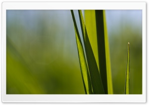Blade Of Grass HD Wide Wallpaper for Widescreen