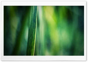 Blade Of Grass Macro HD Wide Wallpaper for Widescreen