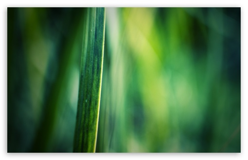Blade Of Grass Macro HD wallpaper for Wide 16:10 5:3 Widescreen WHXGA WQXGA WUXGA WXGA WGA ; HD 16:9 High Definition WQHD QWXGA 1080p 900p 720p QHD nHD ; Standard 4:3 5:4 3:2 Fullscreen UXGA XGA SVGA QSXGA SXGA DVGA HVGA HQVGA devices ( Apple PowerBook G4 iPhone 4 3G 3GS iPod Touch ) ; Tablet 1:1 ; iPad 1/2/Mini ; Mobile 4:3 5:3 3:2 16:9 5:4 - UXGA XGA SVGA WGA DVGA HVGA HQVGA devices ( Apple PowerBook G4 iPhone 4 3G 3GS iPod Touch ) WQHD QWXGA 1080p 900p 720p QHD nHD QSXGA SXGA ;