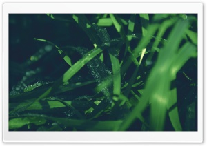 Blades Of Grass HD Wide Wallpaper for Widescreen