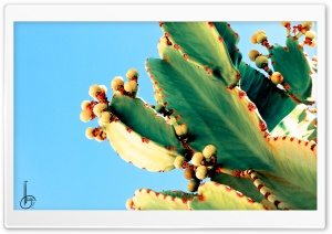 Bleeding Cactus HD Wide Wallpaper for Widescreen