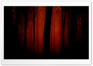 Bloody Forest HD Wide Wallpaper for Widescreen