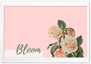 Bloom HD Wide Wallpaper for 4K UHD Widescreen desktop & smartphone