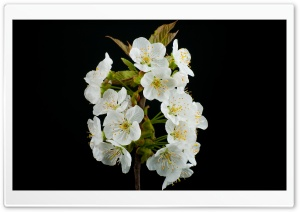 Blooming Flowers, Spring HD Wide Wallpaper for Widescreen