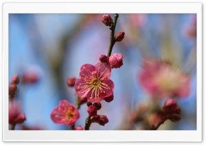 Blooming Tree Spring HD Wide Wallpaper for Widescreen