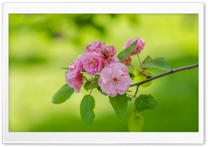 Blooming Tree, Spring, Fresh Green Background HD Wide Wallpaper for Widescreen