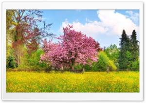 Blooming Trees HD Wide Wallpaper for Widescreen