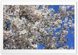 Blossom HD Wide Wallpaper for Widescreen