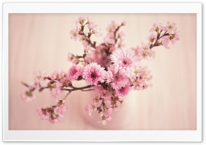 Blossom Branches In Vase HD Wide Wallpaper for Widescreen