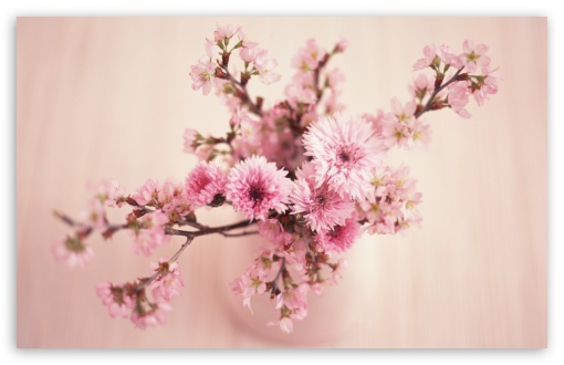 Blossom Branches In Vase HD wallpaper for Wide 16:10 5:3 Widescreen WHXGA WQXGA WUXGA WXGA WGA ; HD 16:9 High Definition WQHD QWXGA 1080p 900p 720p QHD nHD ; Standard 4:3 5:4 3:2 Fullscreen UXGA XGA SVGA QSXGA SXGA DVGA HVGA HQVGA devices ( Apple PowerBook G4 iPhone 4 3G 3GS iPod Touch ) ; Tablet 1:1 ; iPad 1/2/Mini ; Mobile 4:3 5:3 3:2 16:9 5:4 - UXGA XGA SVGA WGA DVGA HVGA HQVGA devices ( Apple PowerBook G4 iPhone 4 3G 3GS iPod Touch ) WQHD QWXGA 1080p 900p 720p QHD nHD QSXGA SXGA ;