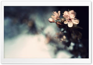 Blossom Close-Up HD Wide Wallpaper for Widescreen