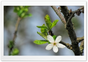 Blossom Flower Macro HD Wide Wallpaper for Widescreen