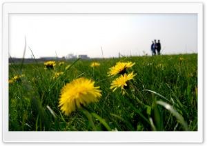 Blossom of Dandelion Ultra HD Wallpaper for 4K UHD Widescreen desktop, tablet & smartphone