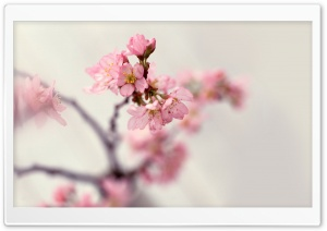 Blossom Tree Ultra HD Wallpaper for 4K UHD Widescreen desktop, tablet & smartphone