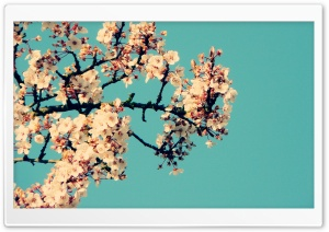 Blossom Tree Against A Blue Sky HD Wide Wallpaper for 4K UHD Widescreen desktop & smartphone