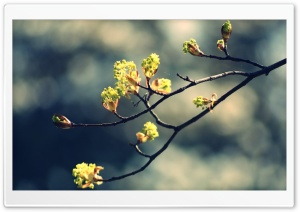 Blossom Twig HD Wide Wallpaper for Widescreen